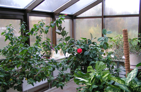 Теплосберегающие стекла надежно защитят зимний сад от непогоды