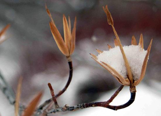 Деревья зимой в саду