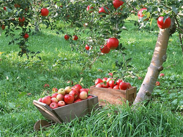 Как подготовить деревья к зиме: осенние садовые работы, экипировка, полезные советы