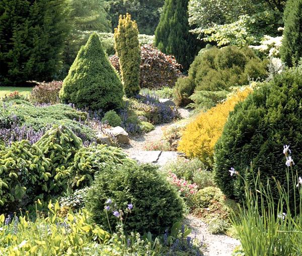 Хвойные, хвойные растения, как купить хвойные, почва для хвойных