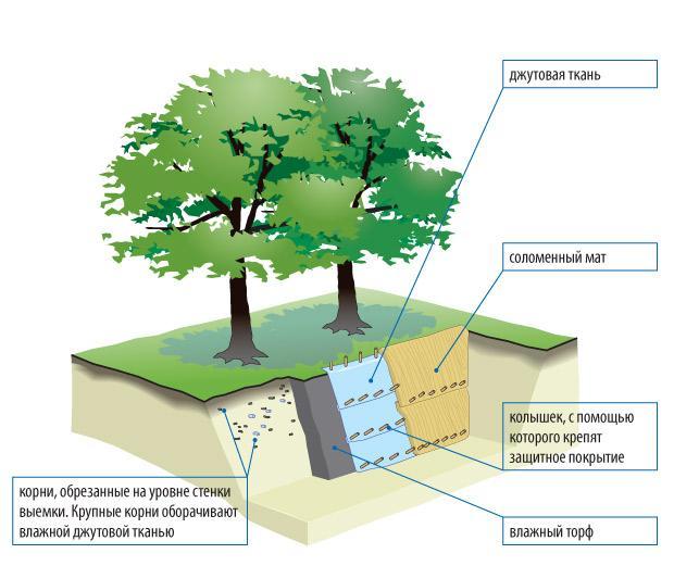 Защита деревьев на стройплощадке