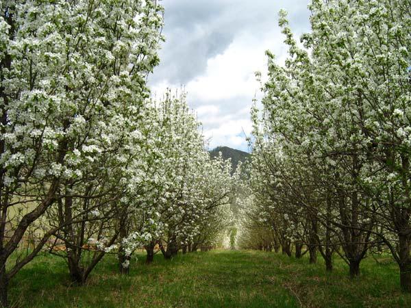Обустраиваем сад: как правильно выбрать саженцы?