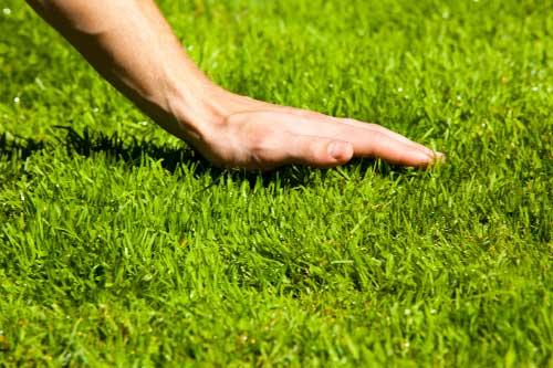 Всё о газоне - основные правила ухода за газоном